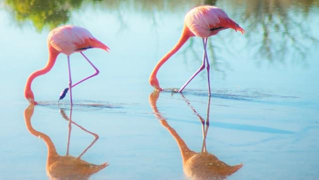 Wie gleich sind Biosimilars? Identisch wie ein Spiegelbild oder eine Kopie können sie wegen ihrer komplexen Struktur nicht sein.(Foto:juustright / stock.adobe.com)