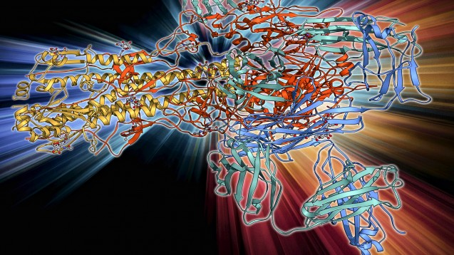 Hämagglutinin ist das primäre Ziel von neutralisierenden Antikörpern im Grippeimpfstoff. ( j / Foto: imago)