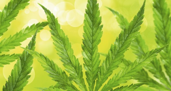 Cannabis als Arznei