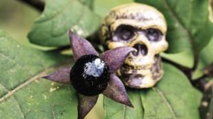 Von Giftpflanzen und Pflanzengiften