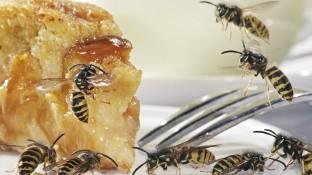 Hilfe, ein Wespenstich!