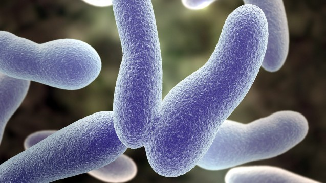 Das Bakterium Corynebacterium diphtheriae – nach den Entdeckern auch Klebs-Loeffler-Bazillus genannt – löst die Diphtherie aus. (s / Foto: Sagittaria / stock.adobe.com)