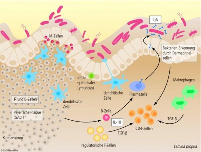Mikrobiom.eps