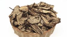Als Droge werden bei der Traubensilberkerze die unterirdischen Pflanzenteile verwendet: Cimicifugae racemosae radix oder Cimicifugae racemosae rhizoma. (Foto: Imago)