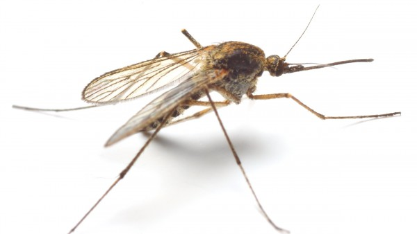 WHO fordert stärkeren Einsatz gegen Malaria