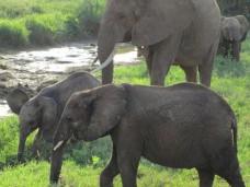 Elefanten leben auf großem Fuß - immerhin wiegen manche Exemplare der größten Landsäugetiere der Erde mehr als fünf Tonnen. Foto: Eva-Maria Krafczyk