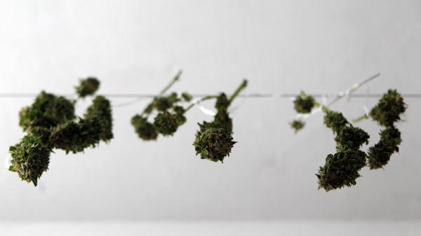 Uruguay erlaubt Marihuana-Verkauf über Apotheken