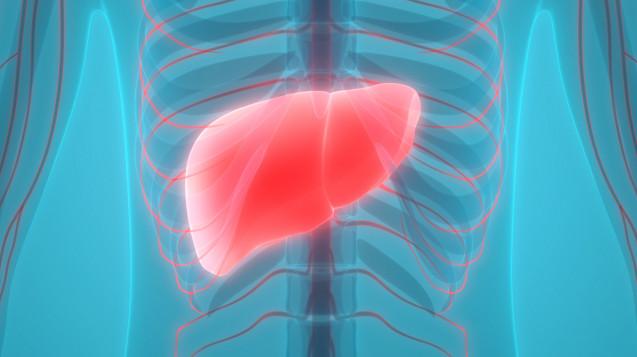 Wegen schwerer Leberschäden wird Ulipristal unter die Lupe genommen. (Foto:magicmine / stock.adobe.com)