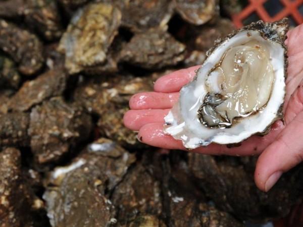 Austern und Anchovis schätzen wärmere Nordsee