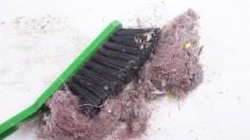 Wo Hausstaub ist, sind Milben. Allergiker sind geplagt. (Foto: taborsky - Fotolia.com