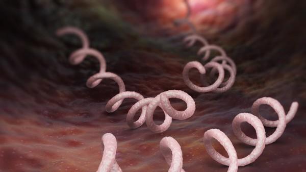 Immer mehr Deutsche leiden an Syphilis