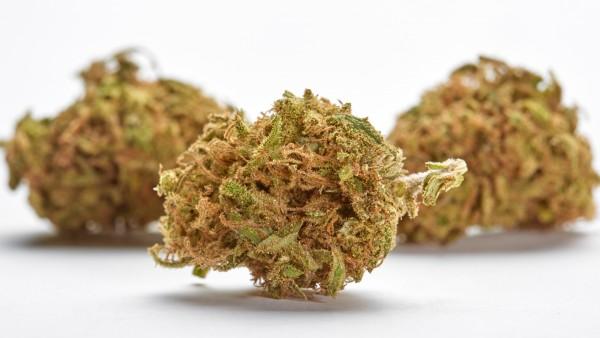 TKlehnt zwei von fünf Cannabis-Anträgen ab