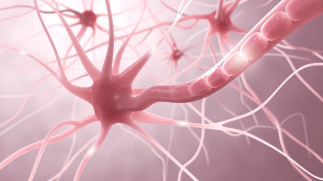 Ocrelizumab soll als CD20-Antikörper gegen B-Zellen die entzündliche Zerstörung der Myelinscheide im ZNS verlangsamen. (Foto: ag visuell / Fotolia)