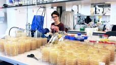 Tanita Wein, Doktorandin in der Arbeitsgruppe Genomische Mikrobiologie an der CAU und Erstautorin der Studie, hat mit ihren Kollegen entdeckt, dass Resistenzen trotzdem bleiben, selbst wenn sie noch nicht mit Antibiotika in Kontakt getreten sind. (Foto: Institut für Allgemeine Mikrobiologie, CAU)