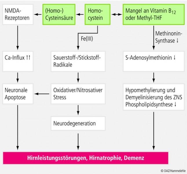 Groeber-Vitamin-B12.eps