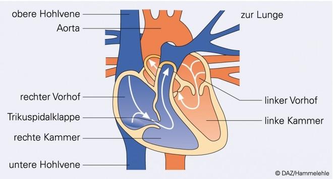 28_du_medizin-graphik1_neu.EPS