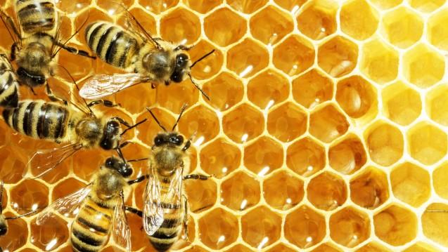 Neonicotinoide schädigen Bienen. Das hat ein aktueller Bericht der Europäischen Behörde für Lebensmittelsicherheit bestätigt. (Foto:Dmytro Smaglov / stock.adobe.com)