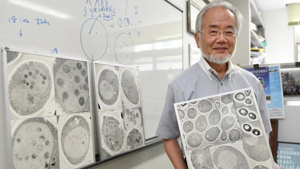Nobelpreis für japanischen Forscher Yoshinori Ohsumi