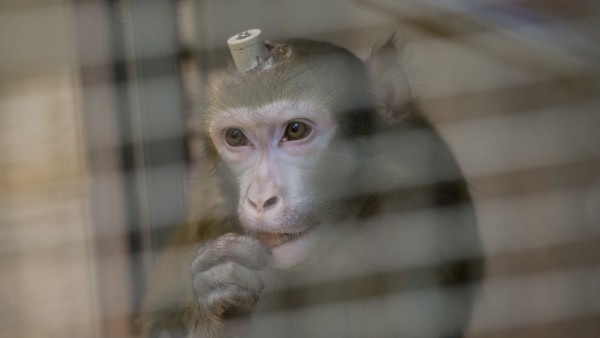 Kampagne zur Information über Tierversuche startet