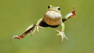 Ein kleiner Frosch und drei Herdplatten
