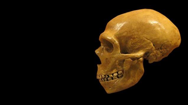 In Zahnstein von Neandertalern fanden Forscher Salicylsäure und Penicillium rubens. (Foto:hairymuseummatt / Wikimedia, CC BY-SA 2.0)