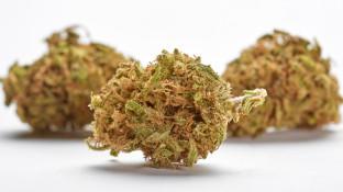 Apotheken gaben im März mehr als 500-mal Cannabisblüten ab
