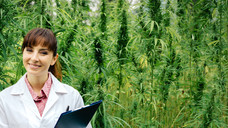 Sativex – ein Extrakt aus Cannabis sativa – sollte für mehr Patienten zugänglich werden, meinen Montgomery und Lauterbach. (Foto: stokkete/Fotolia)