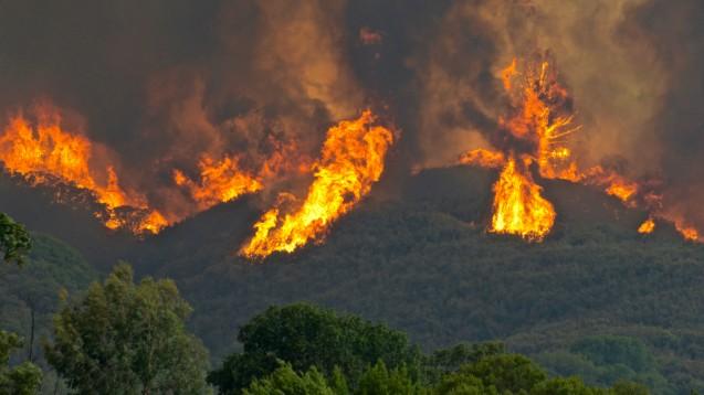 Der Klimawandel hat viele Gesichter: Weltweit haben nur etwa 4 Prozent aller Waldbrände natürliche Ursachen wie beispielsweise Blitzeinschlag. In allen anderen Fällen ist der Mensch verantwortlich, berichtet die Umweltschutzorganisation WWF. (c / Foto: peter armstrong / stock.adobe.com)
