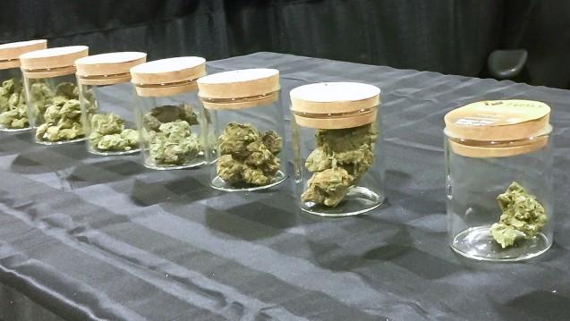 Welche Sorte hätten Sie denn gerne? In Kanada ist Cannabis ein Genussmittel. (m / Foto: DAZ.online, aufgenommen in Toronto)