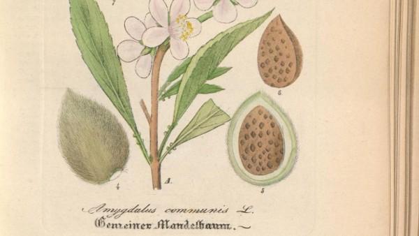 Ein Schatz der Pharmazie-Geschichte