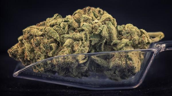 4000 Cannabis-Rezepte mehr in Apotheken