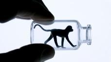 Tübinger Institut verzichtet künftig auf Primatenversuche. (Foto: fotofreaks/Fotolia)