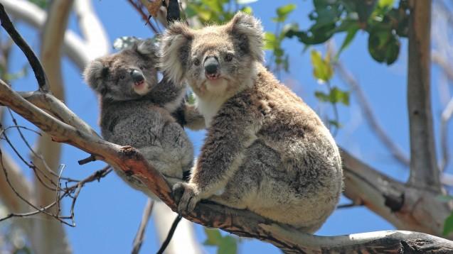 In Australien ist gerade Grippe-Saison (Foto: Robert Cicchetti /Fotolia).