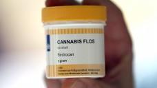 Cannabis-Blüten, unter anderem aus den Niederlanden, sind seit März in deutschen Apotheken auf BtM-Rezept zu haben. (Foto: dpa)