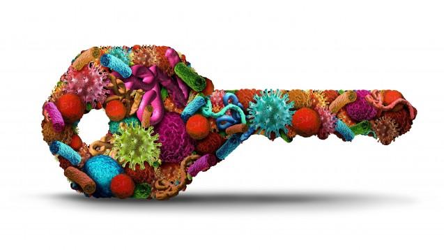 Das Mikrobiom entscheidet mit, ob eine Tumortherapie mit Immun-Checkpoint-Inhibitoren anspricht oder nicht. Eine Antibiotika-Gabe bis 30 Tage vor Checkpoint-Inhibitor-Behandlungsbeginn kann sich negativ auf das Gesamtüberleben auswirken. (s / Foto: freshidea / stock.adobe.com)