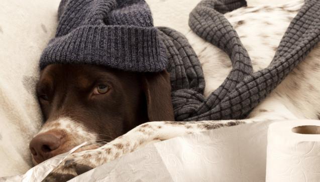 M wie Multisymptomkomplex: Erkältungen werden als sogenannter Multisymptomkomplex bezeichnet. Die typischen Beschwerden sind Schnupfen, Husten, Halsschmerzen sowie Kopf- und Gliederschmerzen. Sie können nacheinander auftreten, meist kommt es jedoch zur Überlappung. Im Schnitt leidet ein Erkältungspatient unter zwei bis drei Erkältungssymptomen gleichzeitig. (Foto:izzetugutmen / stock.adobe.com)
