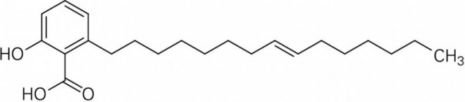 Ginkgolsaeure-C15-1.EPS