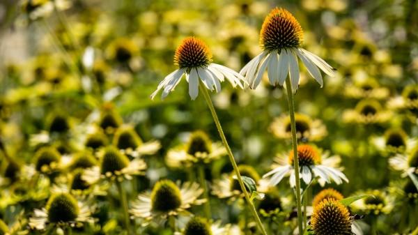 Viel mehr als Pflanzen und Blumen
