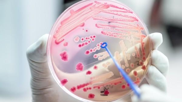 Forschungsallianz für biomedizinisch-pharmazeutische Wirkstoff-Forschung