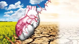 Kardiale Erkrankungen – Wenn der Pumpenkreislauf stockt
