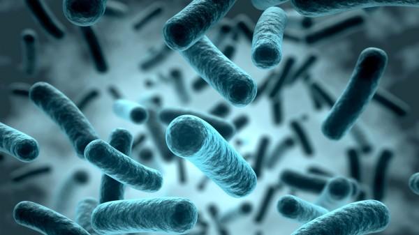 Naturstoff gegen Tsutsugamushi-Fieber entdeckt
