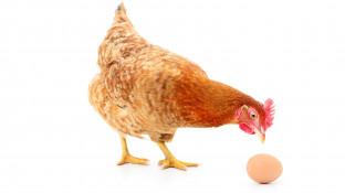 Vergütete Dienstleistungen in der Apotheke– ein Henne-Ei–Problem
