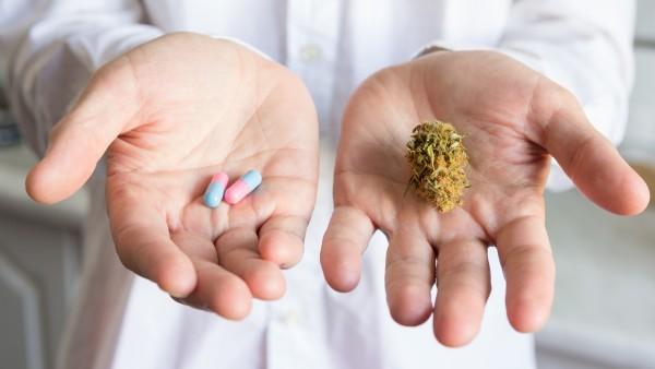 Cannabis: Nutzen und Risiken