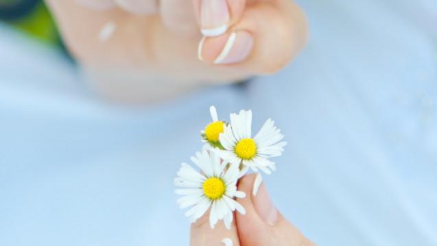 Es gibt wenig Evidenz für das Gänseblümchen - weder bei Liebesdingen noch hinsichtlich der pharmazeutischen Wirkung. (Foto:  cohelia / Fotolia)