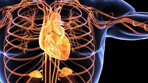 Myokarditis eher bei Jüngeren, Perikarditis eher bei Älteren?
