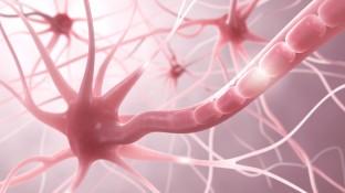 Basistherapie der Multiplen Sklerose