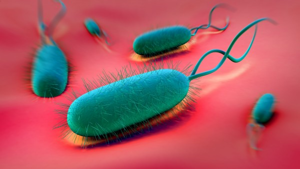 Helicobacter-Therapie unter Umständen auch bei Beschwerdefreiheit