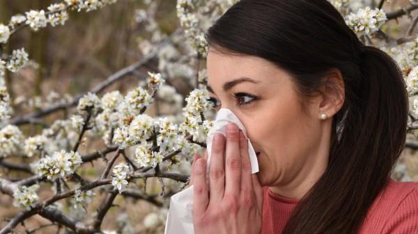 Allergiemittel-Verkauf läuft schleppend an