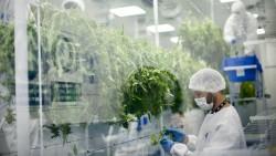 Das Unternehmen Fotmer Life Sciences in Uruguay will demnächst Cannabis in die EU importieren. (c / Foto: Cansativa/Fotmer)