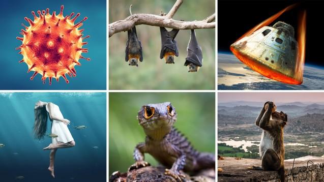 Welches Titelbild gefiel Ihnen 2020 am besten? (Fotos: Feydzhet Shabanov, Craig, cosmicvue, lassedesignen, Opayaza, Michele / stock.adobe.com)